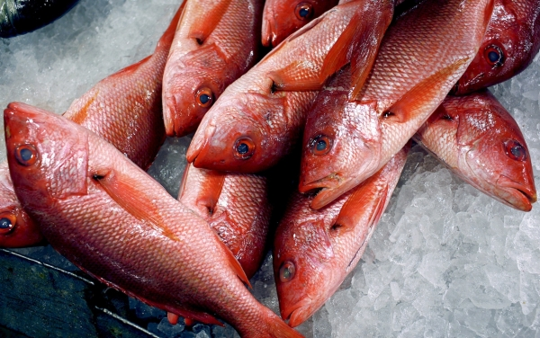 High mercury levels linked to type 2 diabetes u vib blog for Where does mercury in fish come from