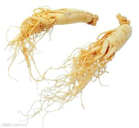 panax-ginseng-root-extract