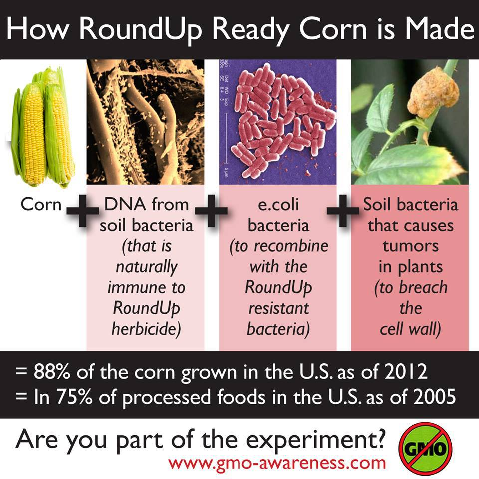 Non Gmo Project Standard http://bloguvib.wordpress.com/2013/07/11/just-say-no-to-gmos-foods/