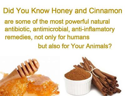 honey and cinamon
