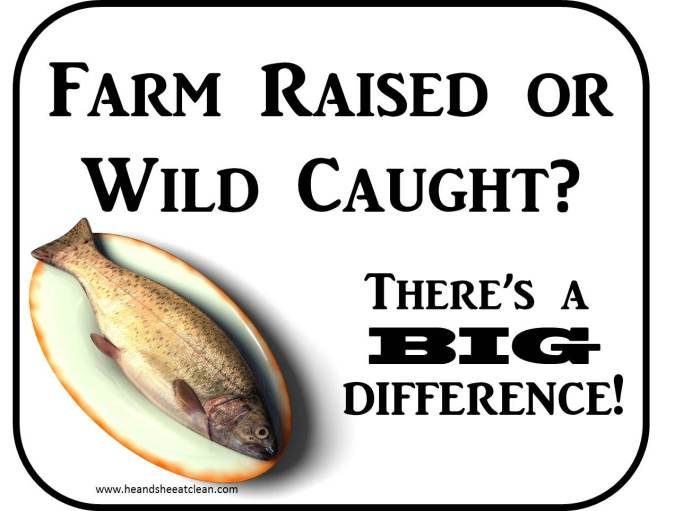 farm_raised_fish_vs_wild_caught_fish_salmon_difference_which_is_better_eat_clean_he_and_she