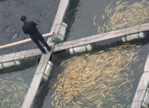 Fish-Farm-300x218