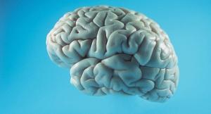 brain31