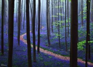 blueforest01-e1402214910872