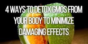 GMOs_endo-1