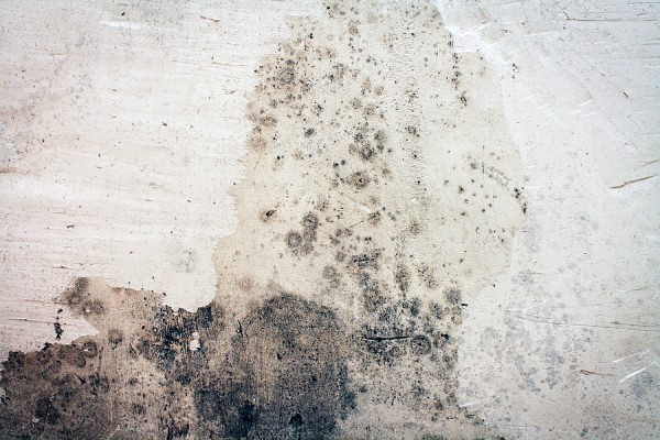 3 Ways To Kill Mold In Your Home Naturally U Vib Blog