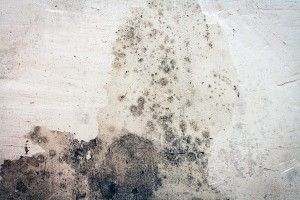 Moldy-Wall-Mold-Removal-Clean-Up-e1418600021752