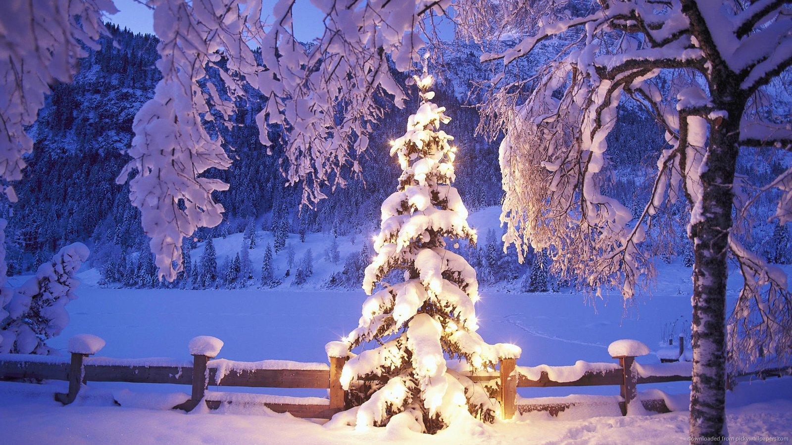 Natural Christmas Tree In Snow