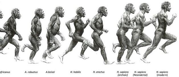 22-HumanEvolution